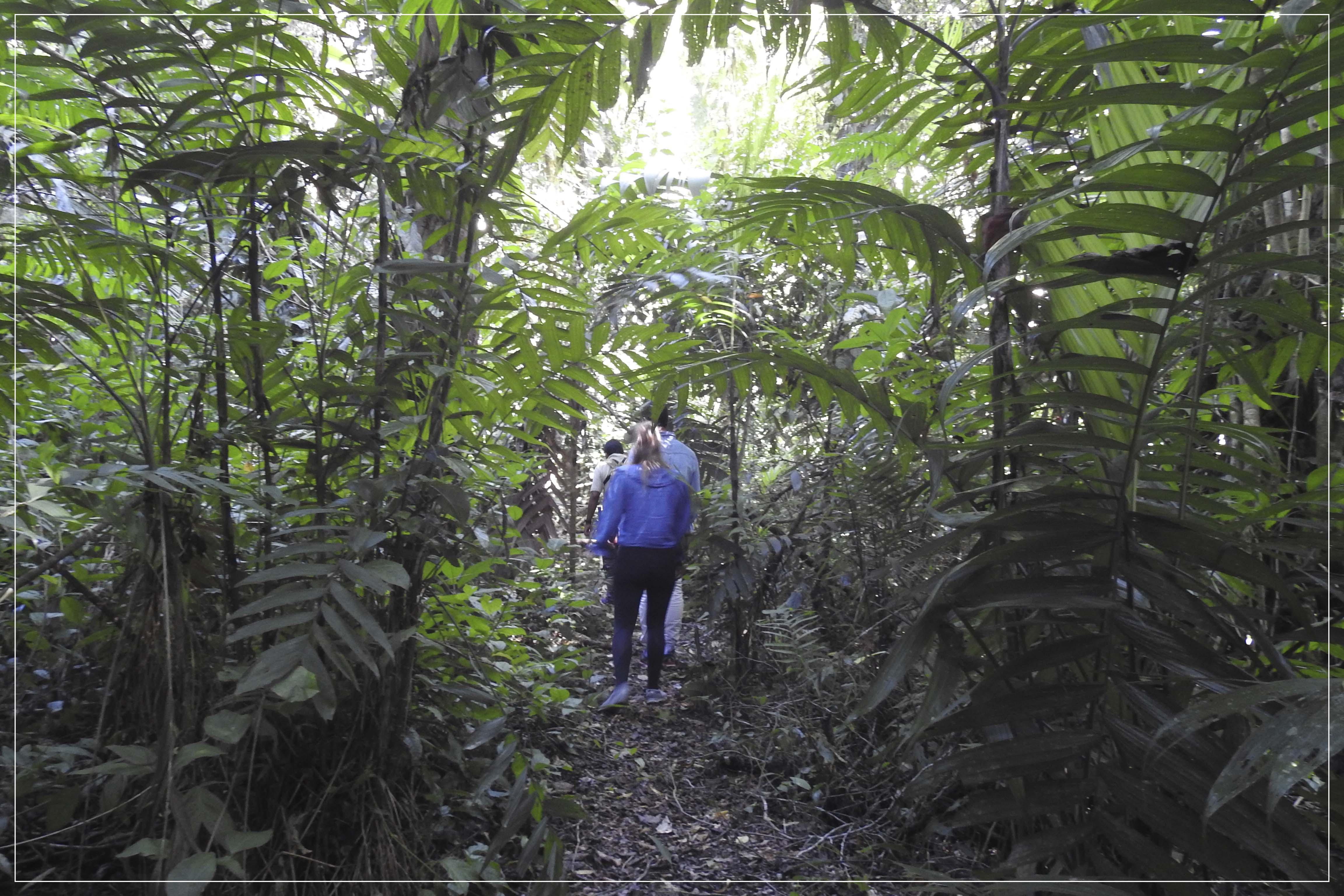 Aventurándonos en Montes Azules  </p> Adventure in Montes Azules Biosphere Reserve </p> (3D/2N)